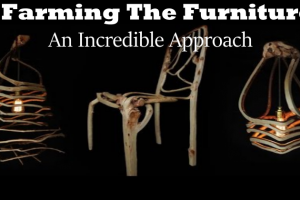 Farming The Furniture- An Incredible Approach