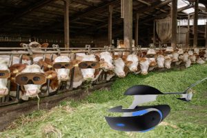 Increasing Milking VR COW Feature